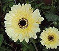 Flowers - Uncategorised Garden plants 113.JPG