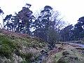 Footbridge Marshaw Wyre - geograph.org.uk - 102263.jpg