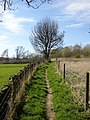 Footpath 46, off Brier Lane, Southowram - geograph.org.uk - 399062.jpg