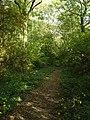 Footpath in Ploughman Wood - geograph.org.uk - 1013606.jpg
