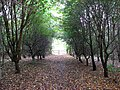 Footpath in Poringland Community Wood - geograph.org.uk - 1533444.jpg