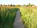Footpath through the Reedbeds - geograph.org.uk - 523406.jpg
