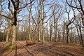 Forêt Départementale de Beauplan à Saint-Rémy-lès-Chevreuse le 21 février 2018 - 10.jpg