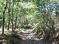 Forêt de la Coubre 013.jpg