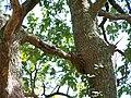 Forêt de la Coubre 039.jpg