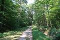 Forêt domaniale de Bois-d'Arcy 69.jpg