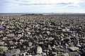 Foreshore near Broadstones, Holy Island - geograph.org.uk - 401505.jpg