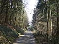 Forest Wood - geograph.org.uk - 378107.jpg