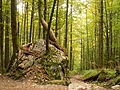 Forest in the Berchtesgaden Nationalpark (3175176694).jpg