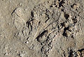 Fossil Coral R04.jpg