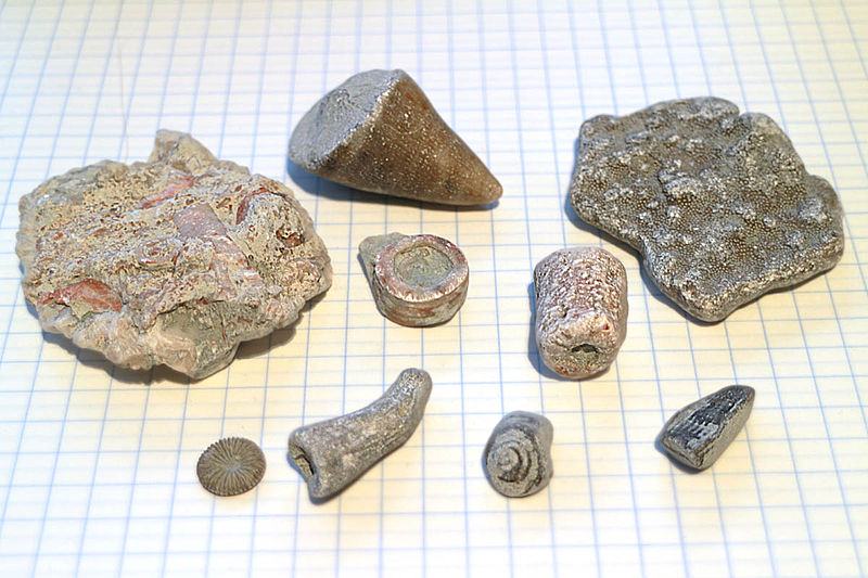 Fossils from Gotland beaches.jpg