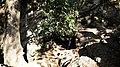 GOA WAKINAMBORO, SIOMPU - panoramio.jpg