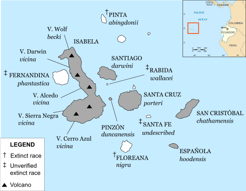 A map of the Galápagos with labels for names of the islands and their native subspecies of tortoise.