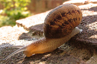 Life in the Undergrowth - The first episode begins with a close-up of a snail.