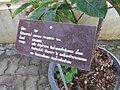 Gardenology.org-IMG 7786 qsbg11mar.jpg