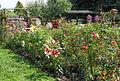 Garten Juli 2014 (15489655762).jpg