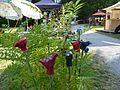 Gartendekoration auf Sommermarkt in Utting.jpg