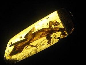 Gecko - Oligocene-era gecko trapped in amber