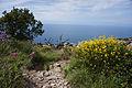 Genoa - trail.jpg