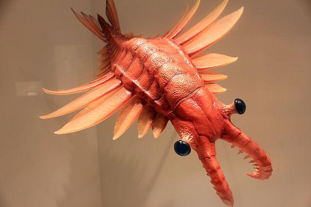 ¿A qué se parece el anomalocaris, el mayor depredador de su época?