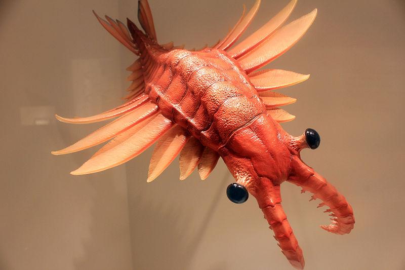 File:Gfp-anomalocaris-predator.jpg