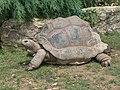 Giant Tortoise.JPG