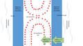 Gill membrane Diffusion figure.png