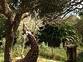 Giraffe bending neck.JPG