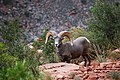 Grand Canyon - kozoroh - panoramio.jpg