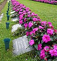 Grave flowers.jpg