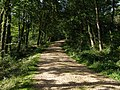 Gravel track in King's Copse Inclosure, New Forest - geograph.org.uk - 515270.jpg