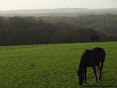Grazing, Ashford Hill - geograph.org.uk - 301983.jpg