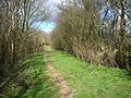 Green Lane with Blackthorn blossom - geograph.org.uk - 373574.jpg