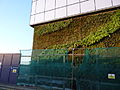 Green Wall Leamouth North.jpg