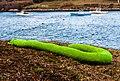 Green Worm From Mackerel Cove (15638135038).jpg