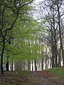 Green leaves - Oakenhill - April 2012 - panoramio.jpg