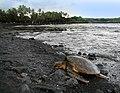Turtle Beach Px  Gr Ef Bf Bdn