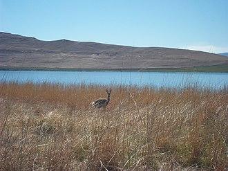 Sterkfontein Dam Nature Reserve - Grey rhebuck at the nature reserve 16 September 2011