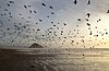 Gulls on Morro Strand State Beach.jpg