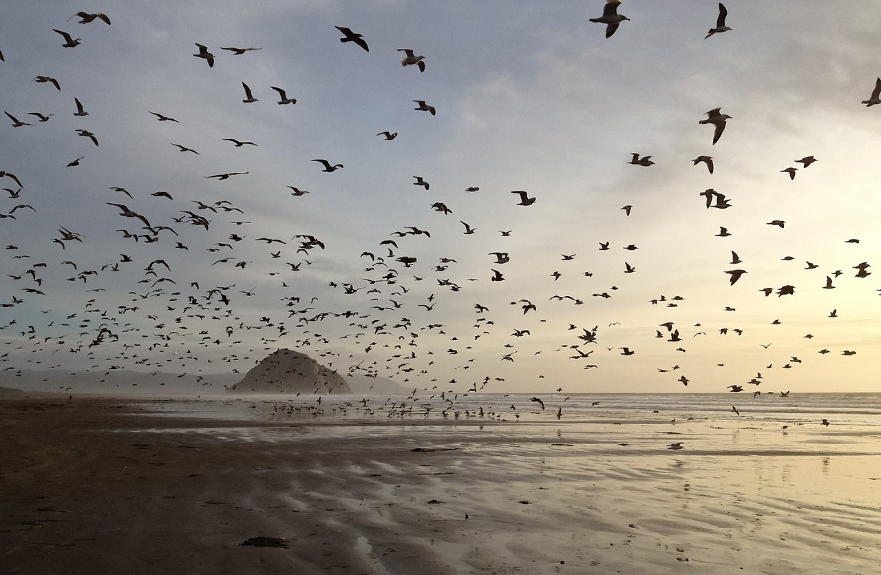 Morro Strand State Beach Campground Reviews