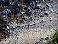 Hällristningar i Skälv, den 25 augusti 2008, bild 1.JPG