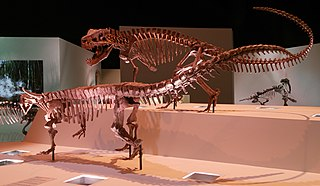 Pseudosuchia Clade of reptiles