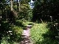 Hall Royd Wood Footpath - geograph.org.uk - 520212.jpg