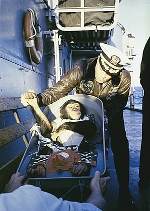 "Ham (chimpanzee) - A ""hand shake"" welcome. After his flight on a Mercury-Redstone rocket, chimpanzee Ham is greeted by the commander of the recovery ship, USS ''Donner'' (LSD-20)."