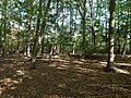 Hambach forest 59.jpg