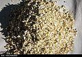 Harvest Citrus flowers in Iran 20.jpg