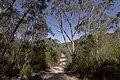Heathcote NSW 2233, Australia - panoramio (58).jpg