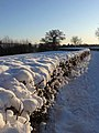 Hedge full of snow - geograph.org.uk - 1657216.jpg