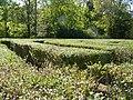 Hedges PA260087.jpg