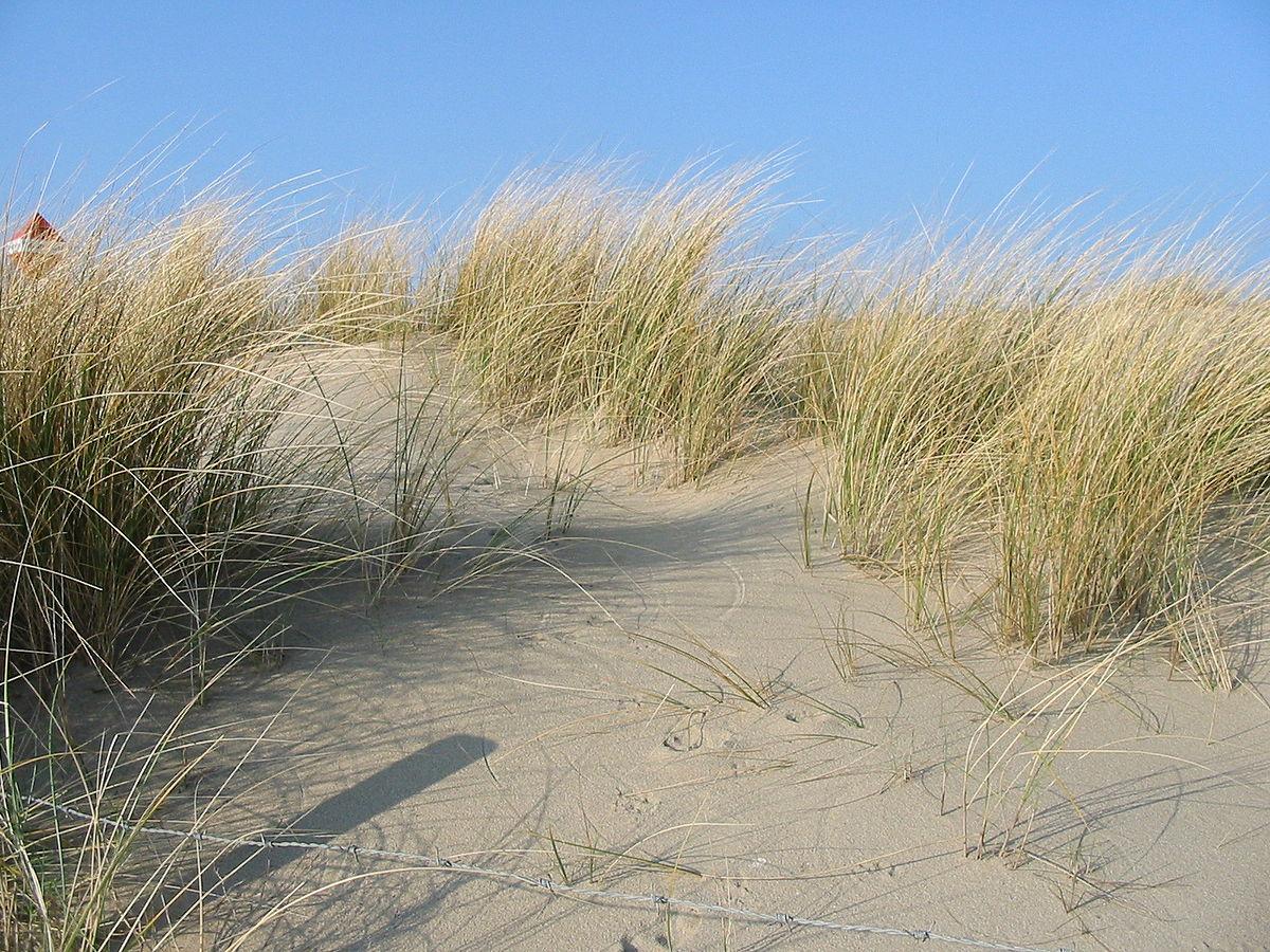 Sand Dune Stabilization Wikipedia